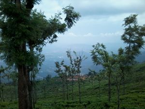 Coonoor-a refuge to the lush greenery of the Tea gardens and an Ideal getaway for nature lovers!