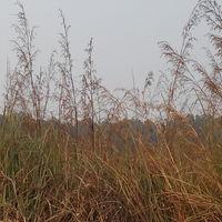 Dudhwa National Park 4/34 by Tripoto