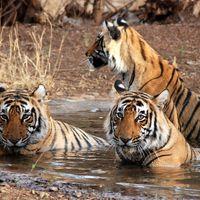 Fambong Lho Wildlife sanctuary 2/2 by Tripoto