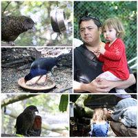Nga Manu Nature Reserve 2/2 by Tripoto