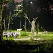 Night Safari Singapore 3/11 by Tripoto