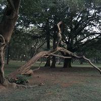 Cubbon Park 5/10 by Tripoto