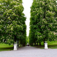 Drottningholm Palace 4/18 by Tripoto