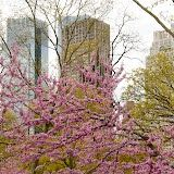 Central Park 2/50 by Tripoto