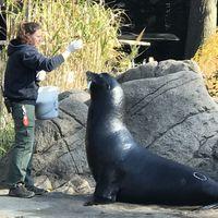 Bronx Zoo 5/5 by Tripoto