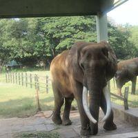 Mysore Zoo DZ 5/27 by Tripoto