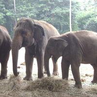 Mysore Zoo DZ 2/27 by Tripoto