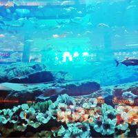 Dubai Aquarium & Underwater Zoo - Dubai - United Arab Emirates 4/9 by Tripoto