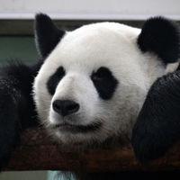 Beijing Zoo 2/3 by Tripoto
