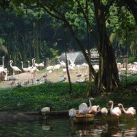 Jurong Bird Park 5/53 by Tripoto