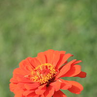 Chandigarh Rose Garden 5/5 by Tripoto